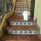 Terra Cotta stair tread with 6in Samarkand riser