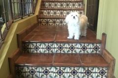 Terra Cotta stair tread with 6in Samarkand riser